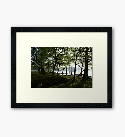 View Through the Woods Framed Print