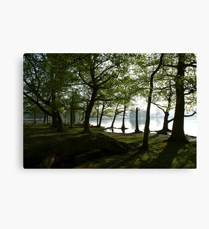 View Through the Woods Canvas Print