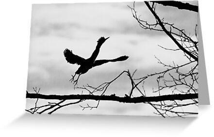 Green Heron Silhouette  by Tom Talbott
