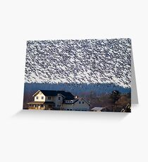 Skagit Valley Snow Geese Greeting Card