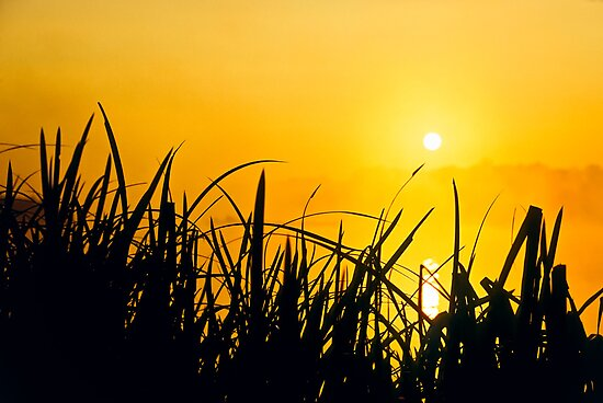 Sunrise through the reeds by Gary Rayner