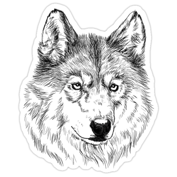 Quot Arctic Wolf Face Quot Stickers By Lauramss Redbubble