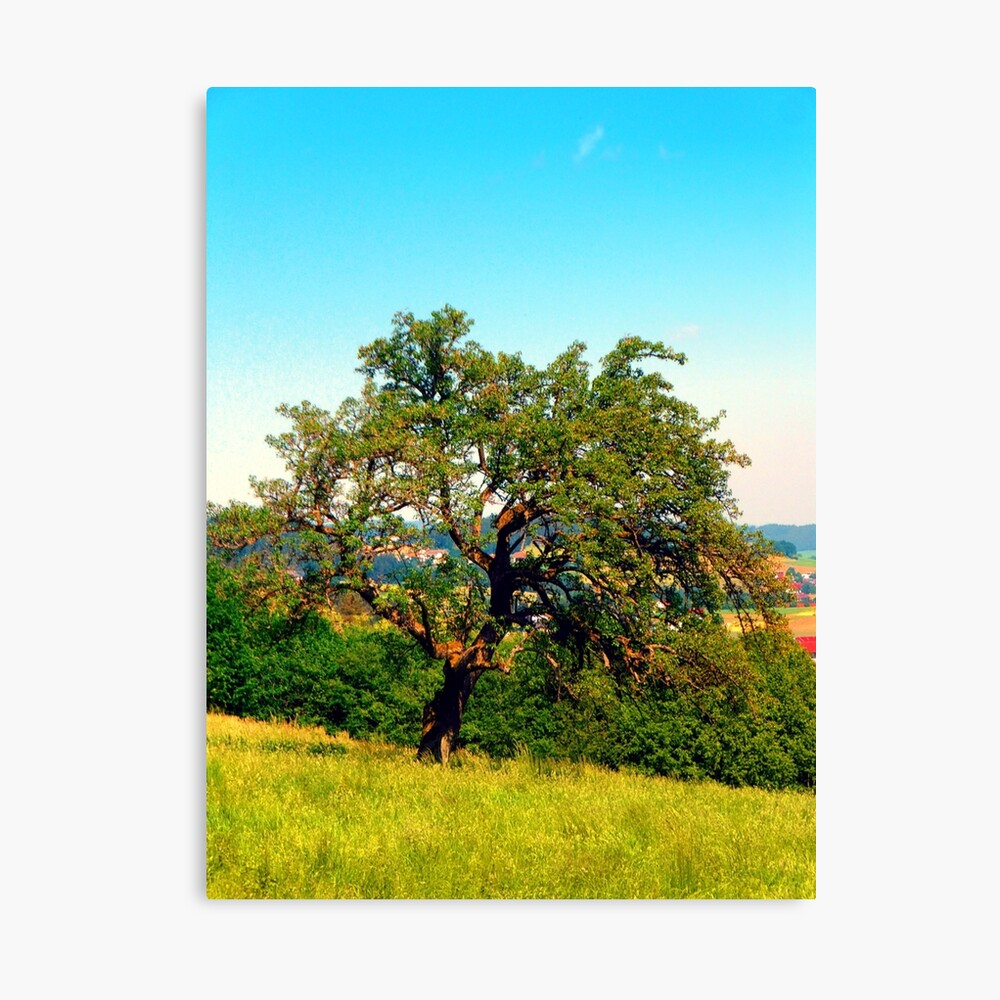 Yet another old tree Canvas Print