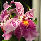 Oh Orchid! by MarianBendeth