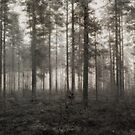 Haunted Forest II by SunDwn