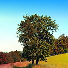 Old tree, vibrant surroundings by Patrick Jobst