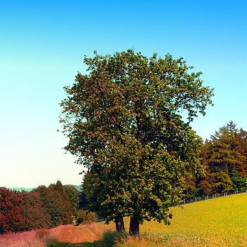 Old tree, vibrant surroundings by patrickjobst