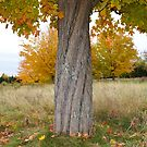 Spiral Tree Trunk with Colorful Fall Leaves by Nadine Staaf