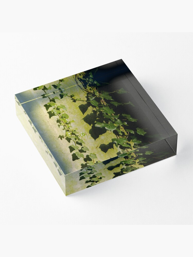 Alternate view of Trailing ivy on grave Acrylic Block