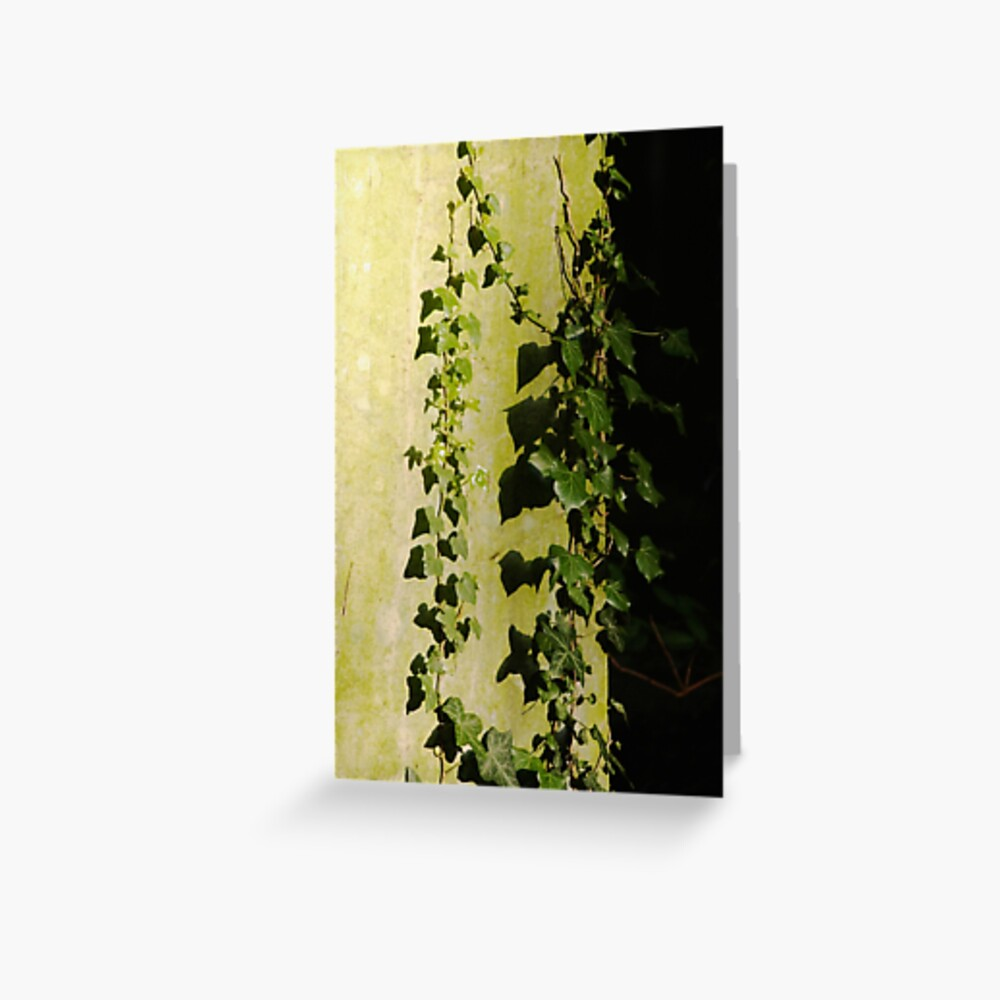 Trailing ivy on grave Greeting Card