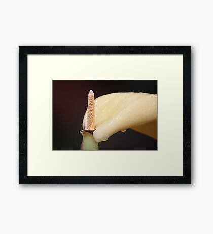 No It's Not A Lily... Framed Print