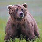 A Big Brown Bear!! by Anthony Goldman