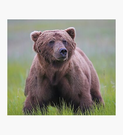 A Big Brown Bear!! Photographic Print
