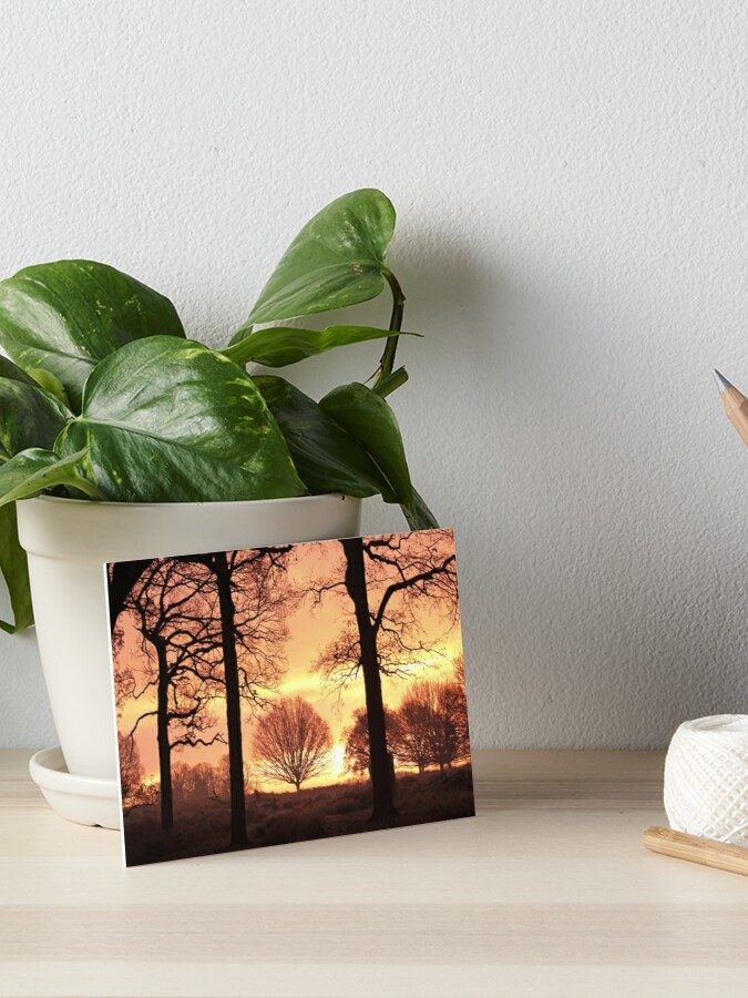 Oak Trees At Sunrise In Richmond Park Art Board Print By Jmwilesphotos Redbubble