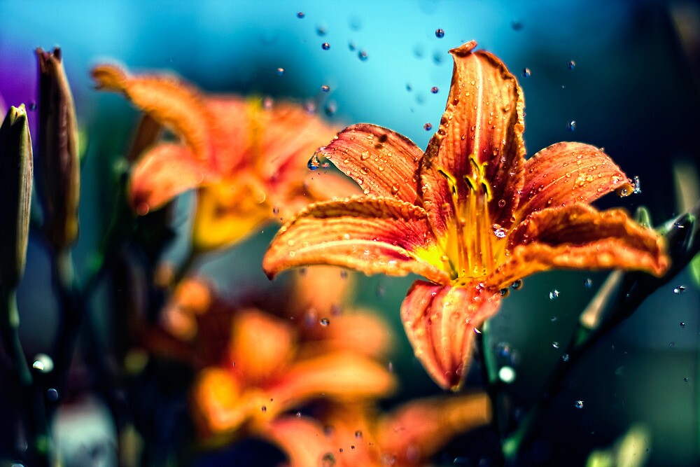 Flowers in the Rain by Falko Follert