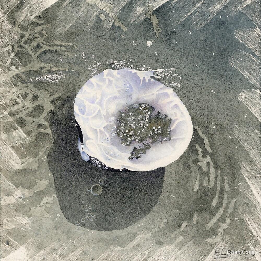 Splashing Clamshell by Brian Cody
