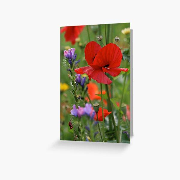 Poppy in a field of wild flowers Greeting Card