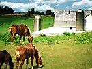 Grazing Horses by Marcia Rubin