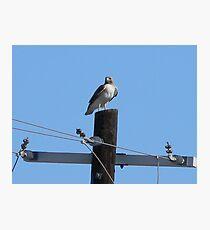 Lámina fotográfica Proud Stance of the Hawk