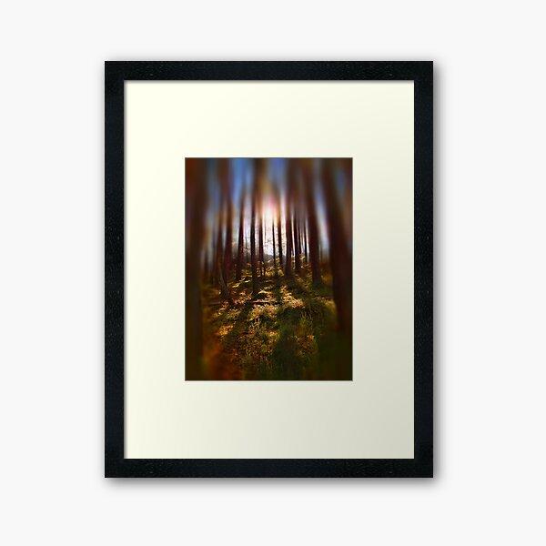 Forest Light 9 Framed Art Print