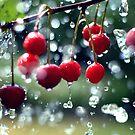 Cherries in the summer rain by Falko Follert