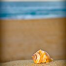 Shell! by Dave  Gosling Photography
