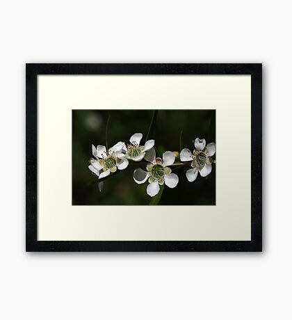 Tea Tree  Framed Print
