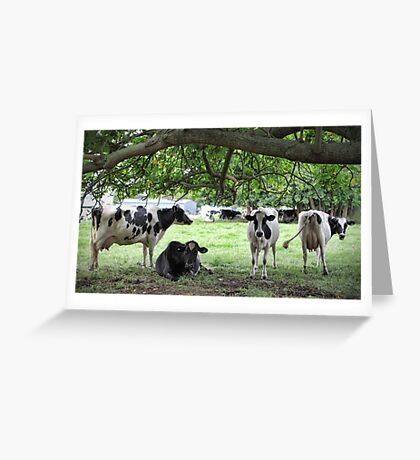 More Dairy Cows Greeting Card