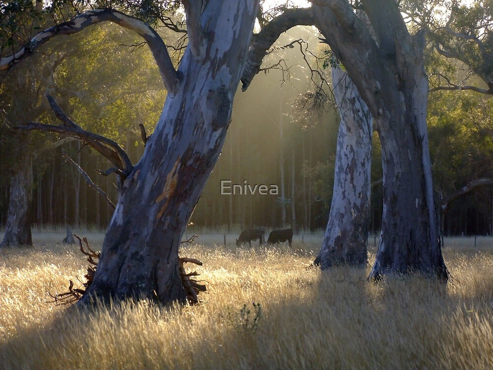 Forest's Edge by Enivea