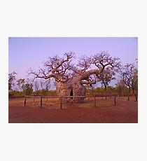 Boab Tree, Kimberley, WA Photographic Print