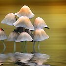 Mushrooms by shalisa