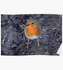Redbreast Poster