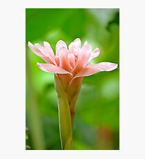 The Garden 8 - Ginger Torch Lily Photographic Print
