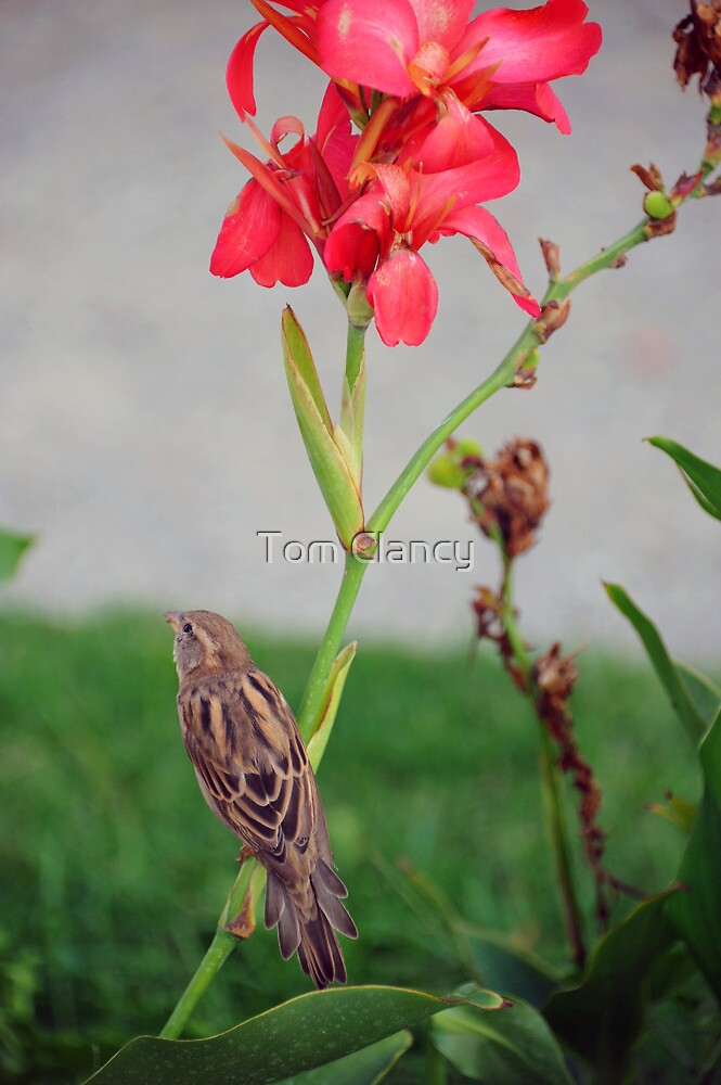 Flora and Fauna by Tom Clancy