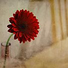 Red Gerbera - Textured by Robert Worth
