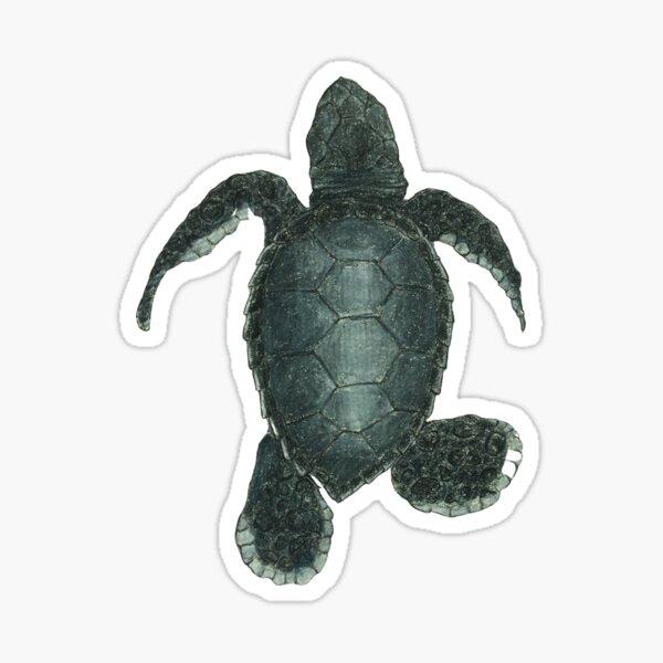 baby kemps Ridley sea turtle  Sticker
