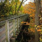 Virginia Creeper Trail, Abingdon by Cecilia Carr