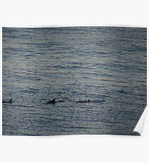 Dolphins - Delfínes Poster