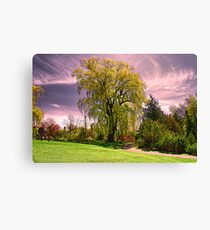 Weeping Willow Tree Canvas Print