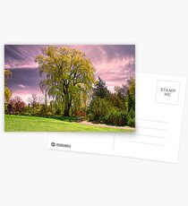 Weeping Willow Tree Postcards