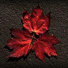 Autumn's Fire by Kelly Chiara
