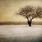 Lonely Tree by Yelena Rozov
