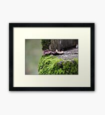 ♫ In My Little Town ♫♪ Framed Print