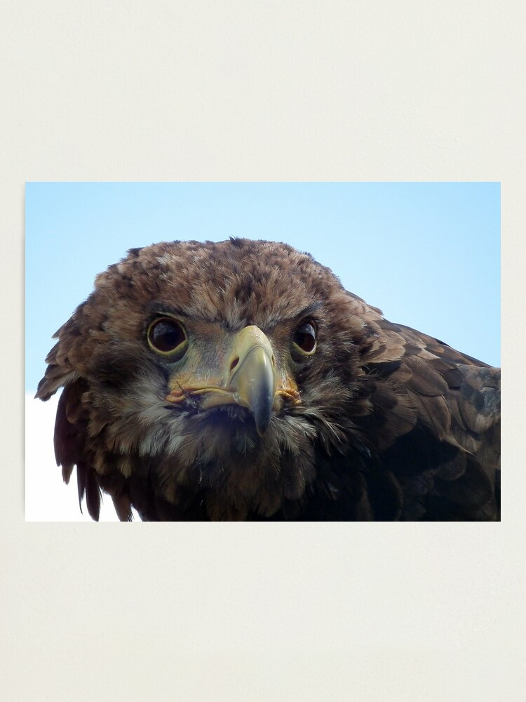 Alternate view of Eagle Stare Photographic Print