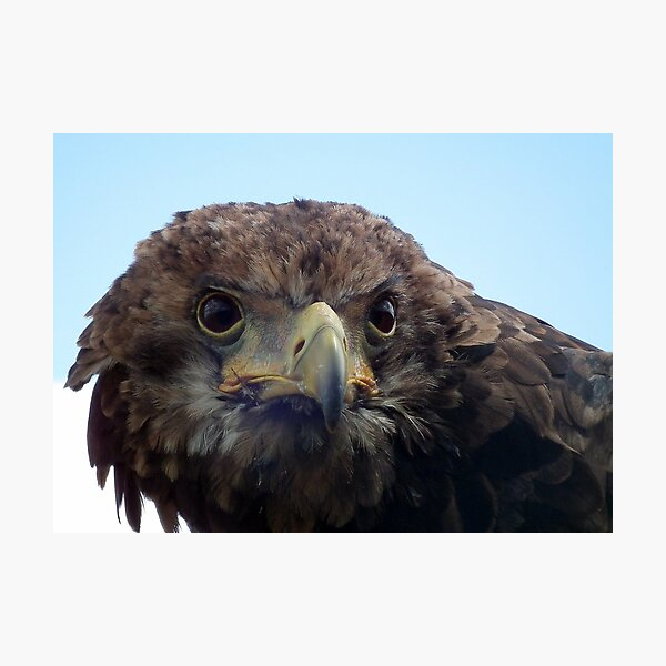Eagle Stare Photographic Print