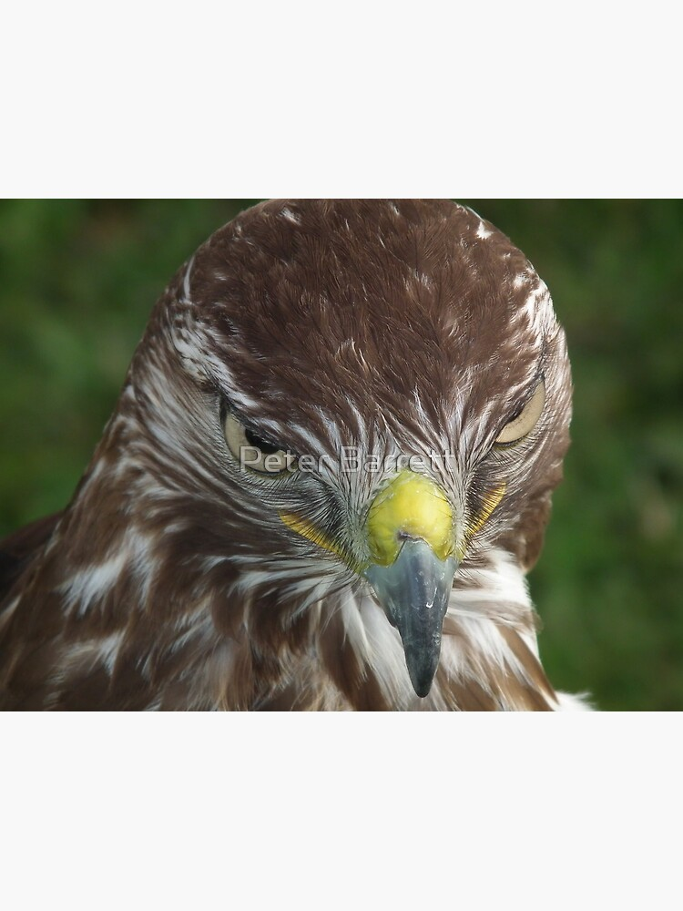 Evil look Eagle by hartrockets