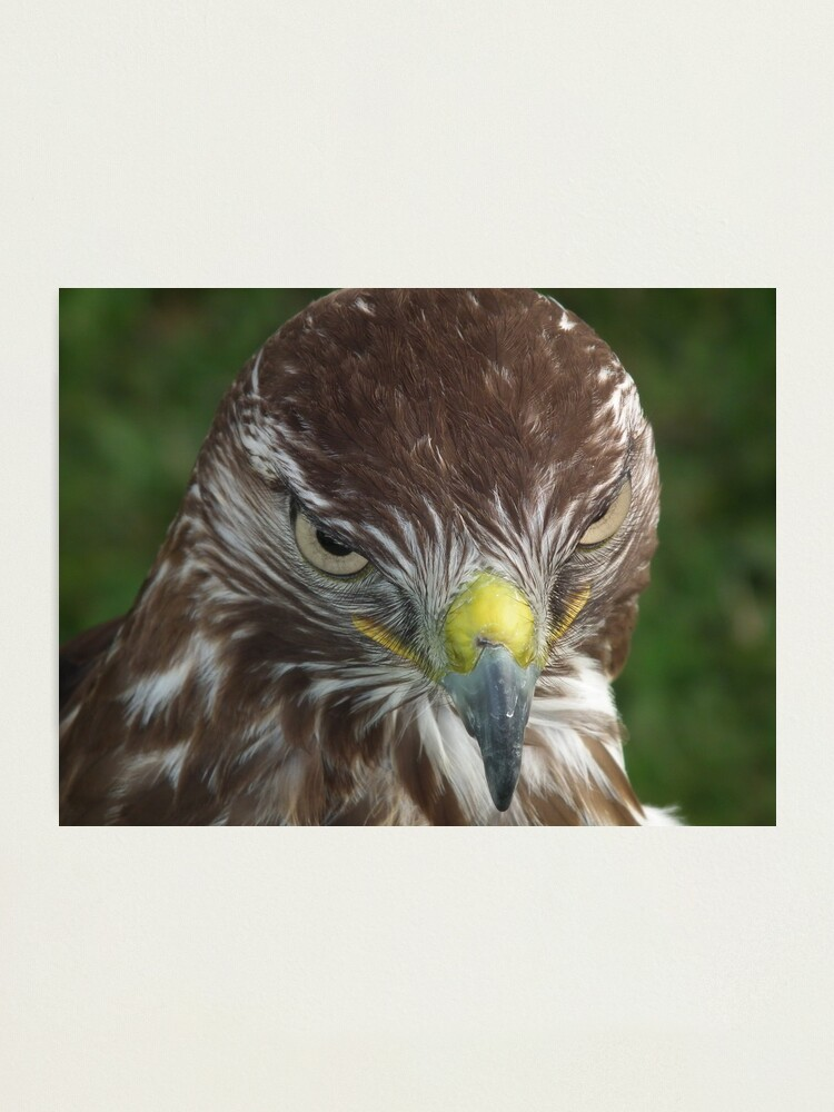 Alternate view of Evil look Eagle Photographic Print