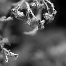 Dead Flower by SunDwn