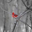 A Spot of Red in the Land of Black and White by Brian Gaynor