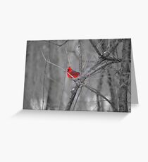 A Spot of Red in the Land of Black and White Greeting Card